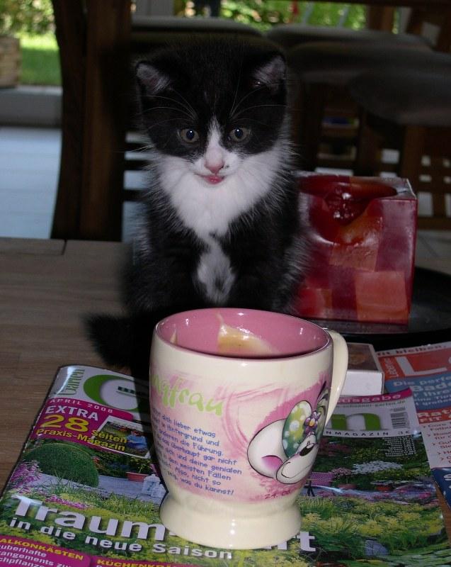 cup_of_coffe.JPG
